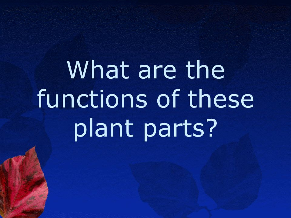 What are the functions of these plant parts