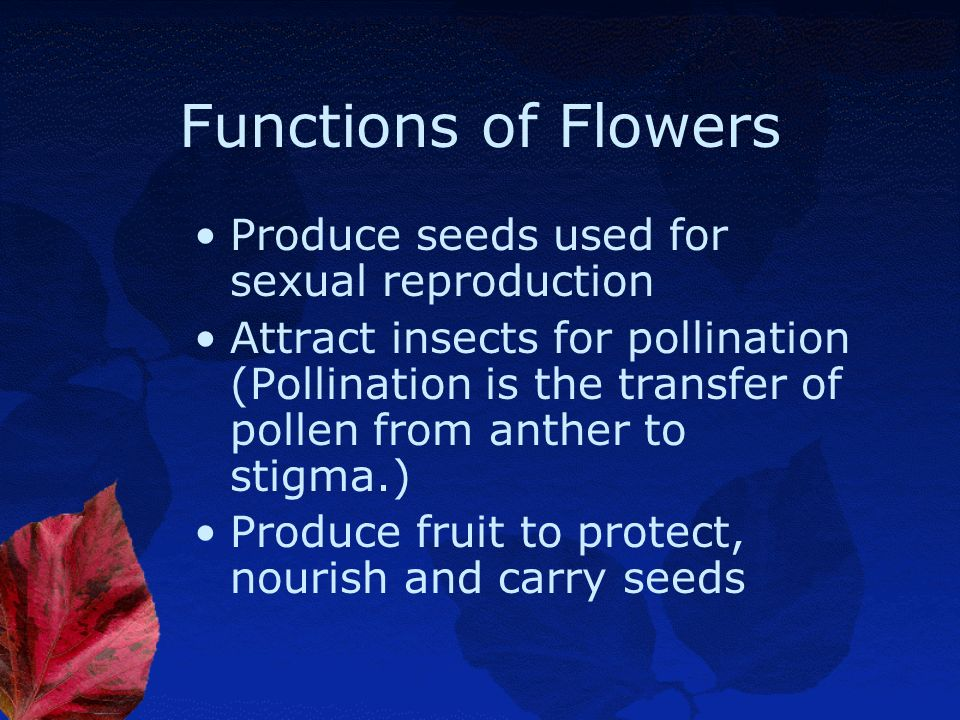 Functions of Flowers Produce seeds used for sexual reproduction