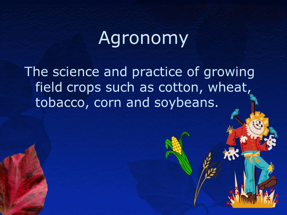 Agronomy The science and practice of growing field crops such as cotton, wheat, tobacco, corn and soybeans.