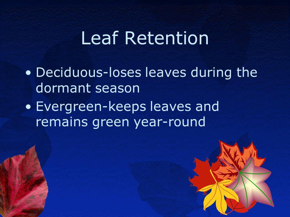 Leaf Retention Deciduous-loses leaves during the dormant season