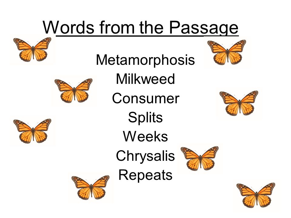 Words from the Passage Metamorphosis Milkweed Consumer Splits Weeks