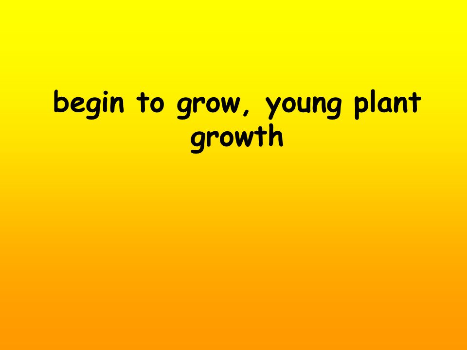 begin to grow, young plant growth