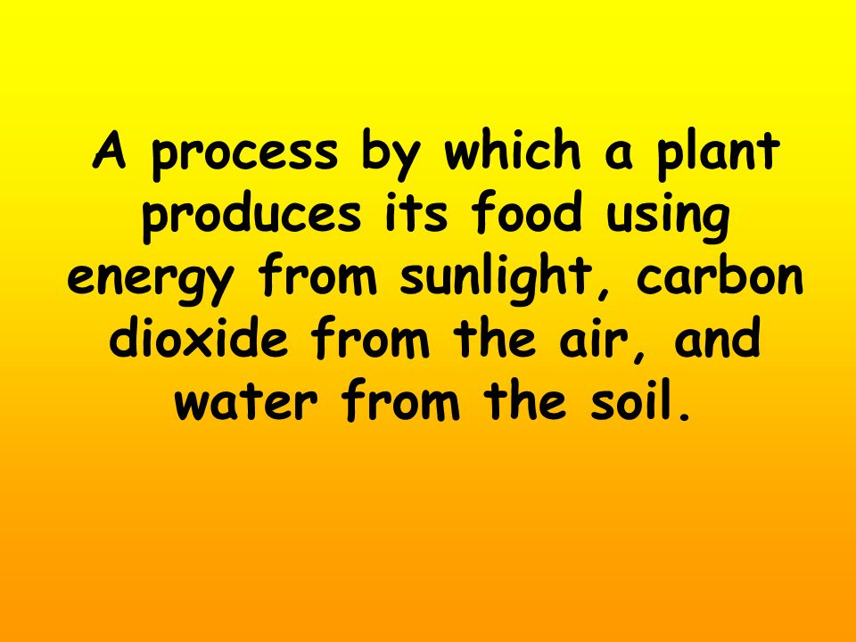 A process by which a plant produces its food using energy from sunlight, carbon dioxide from the air, and water from the soil.