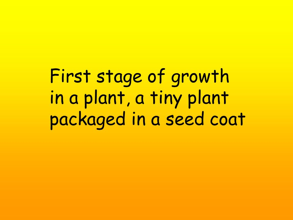 First stage of growth in a plant, a tiny plant packaged in a seed coat