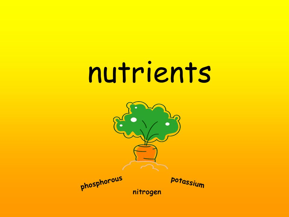 nutrients phosphorous potassium nitrogen