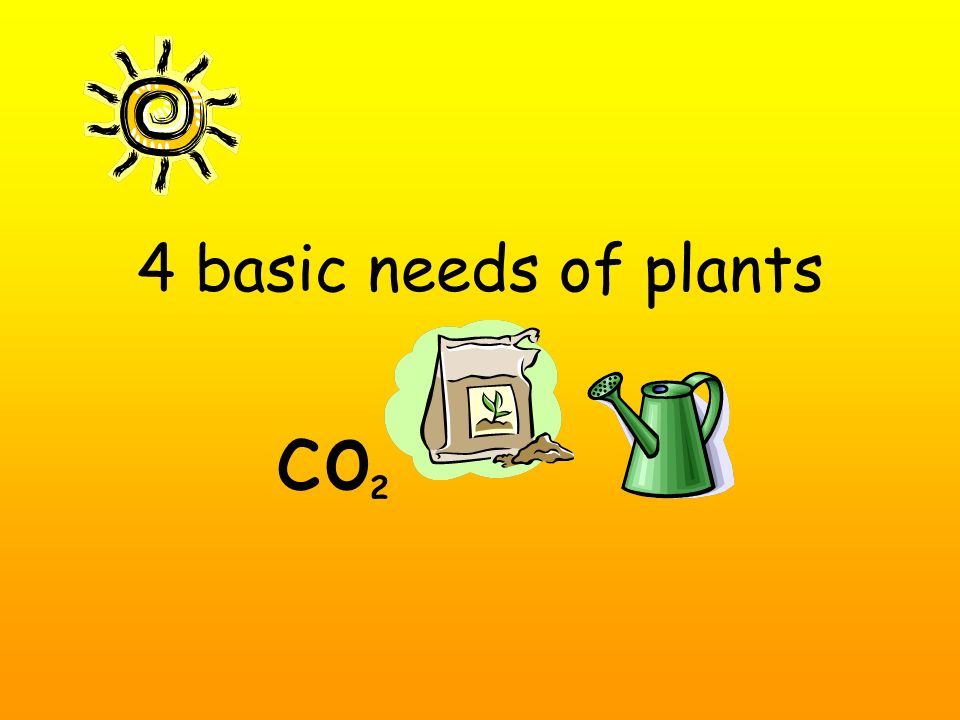 4 basic needs of plants co 2