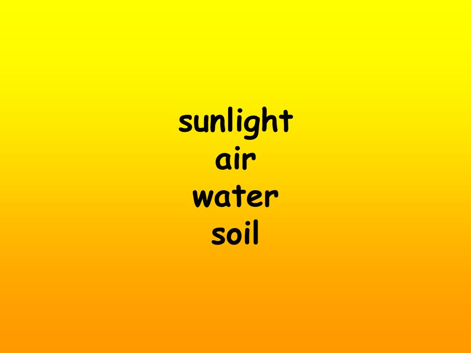 sunlight air water soil