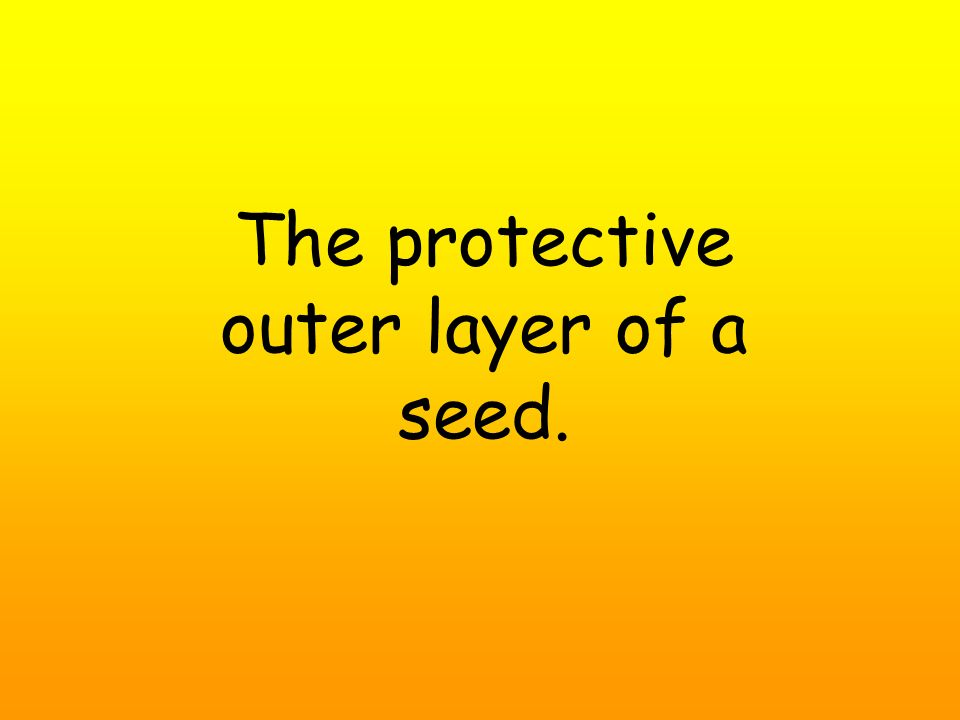 The protective outer layer of a seed.
