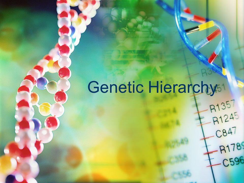 Genetic Hierarchy