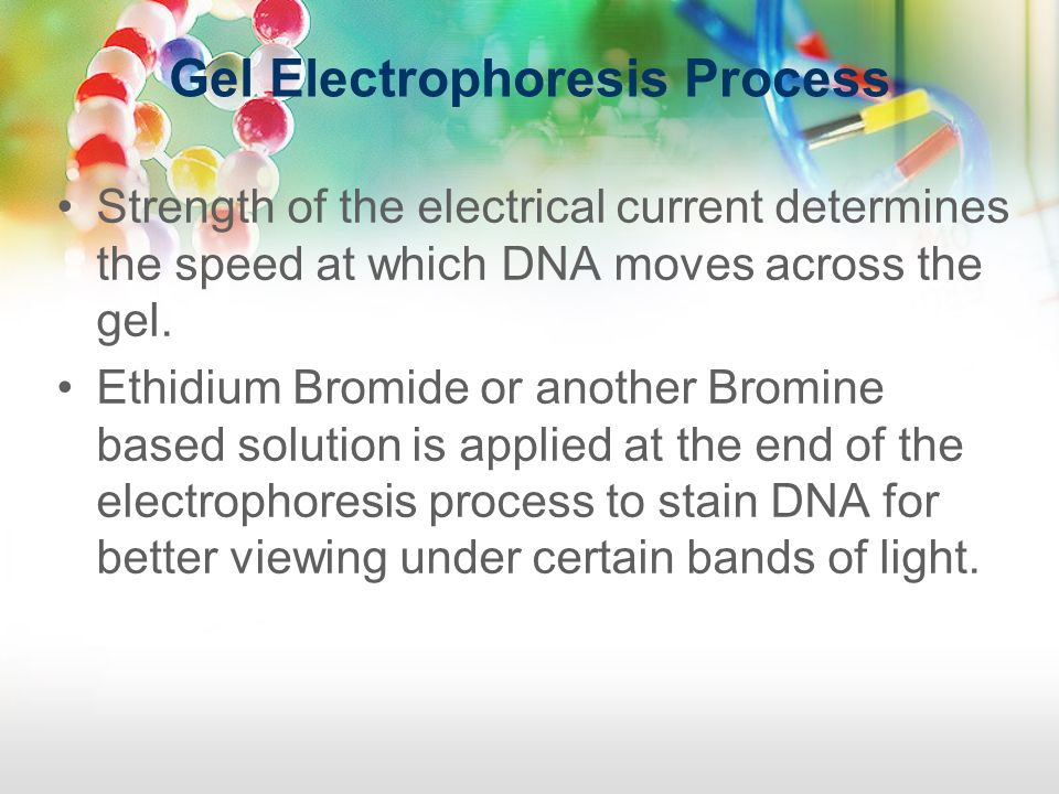 Gel Electrophoresis Process