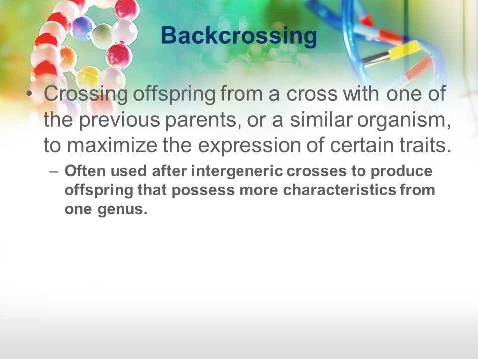 Backcrossing Crossing offspring from a cross with one of the previous parents, or a similar organism, to maximize the expression of certain traits.