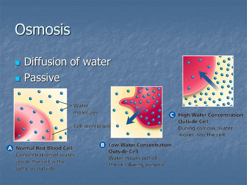 Osmosis Diffusion of water Passive