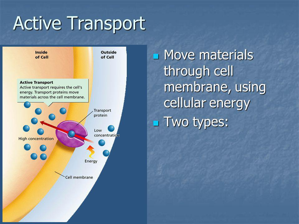 Active Transport Move materials through cell membrane, using cellular energy Two types: