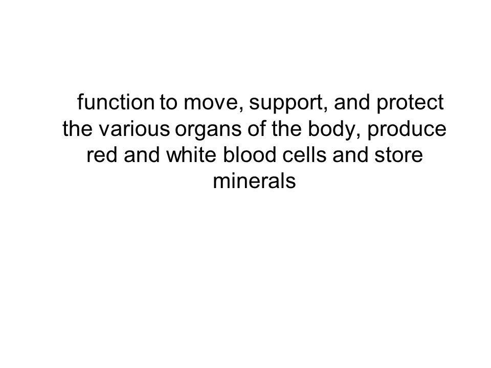 function to move, support, and protect the various organs of the body, produce red and white blood cells and store minerals