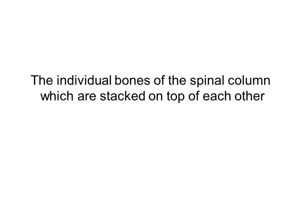 The individual bones of the spinal column which are stacked on top of each other