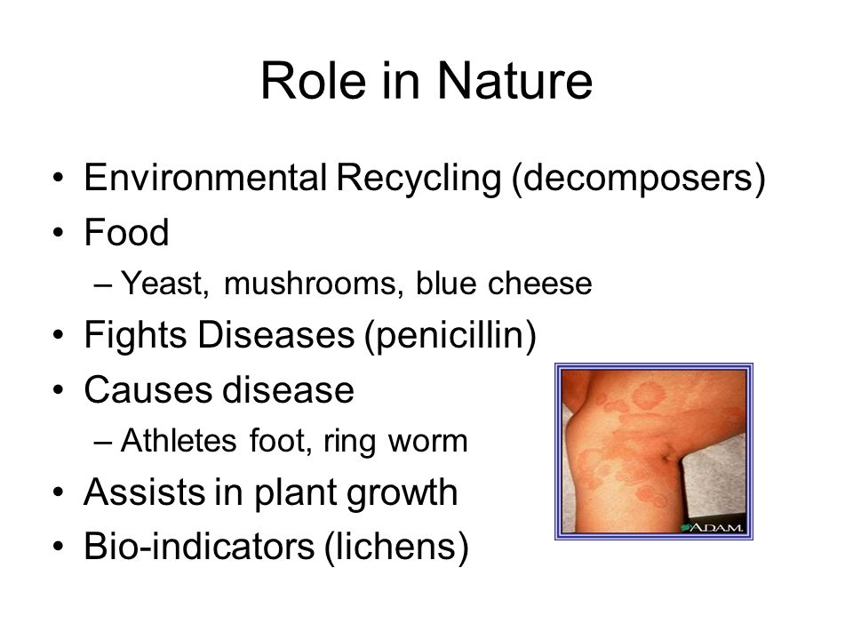 Role in Nature Environmental Recycling (decomposers) Food