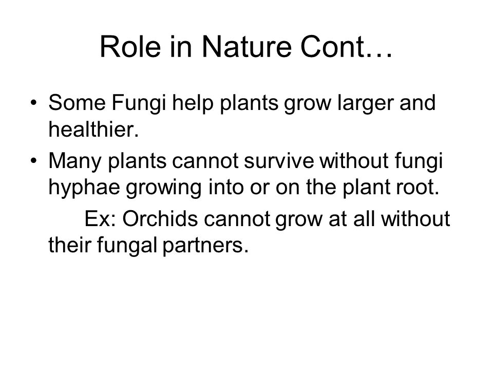 Role in Nature Cont… Some Fungi help plants grow larger and healthier.