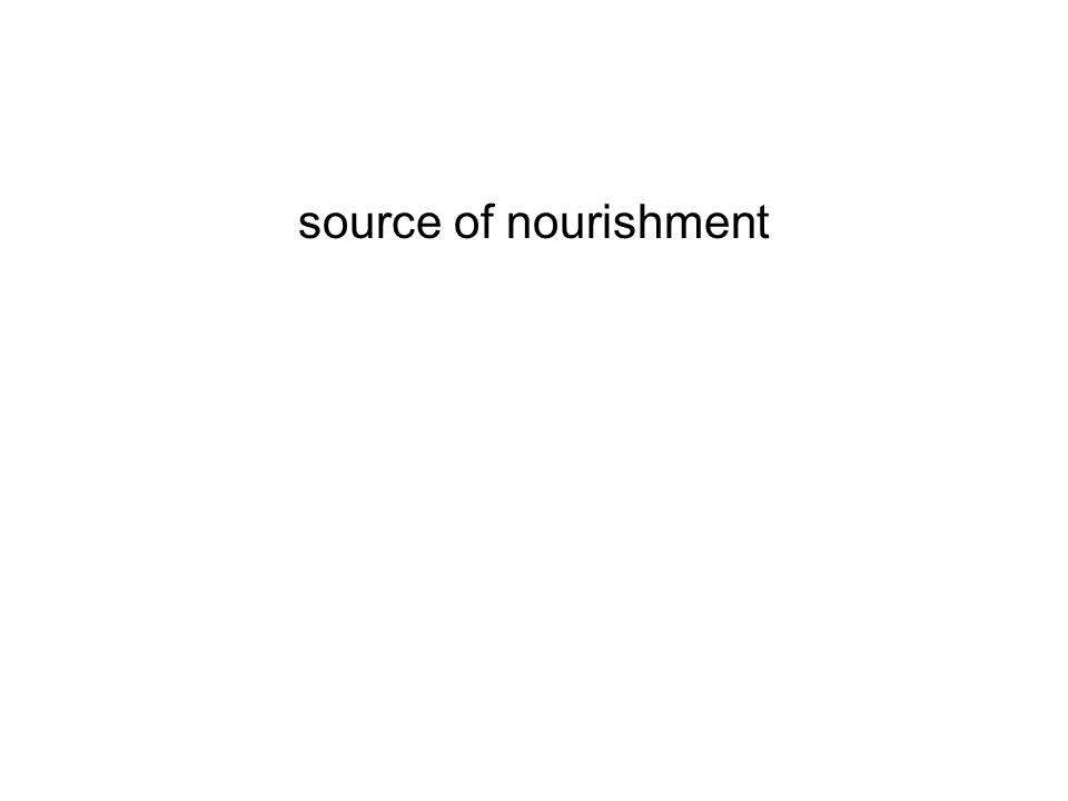 source of nourishment