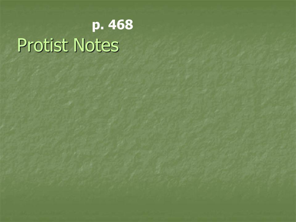p. 468 Protist Notes