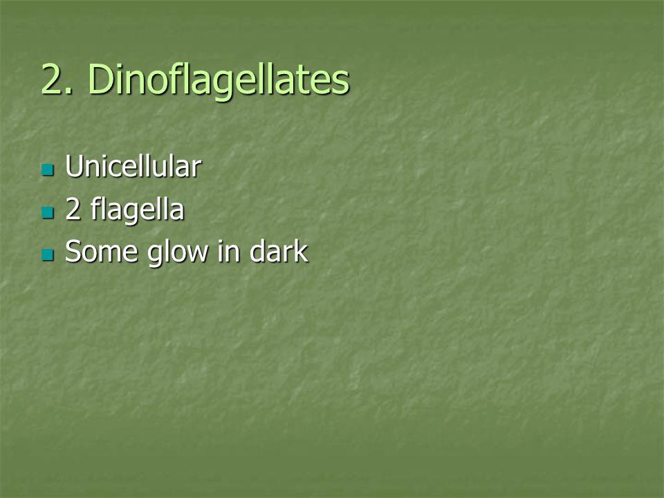 2. Dinoflagellates Unicellular 2 flagella Some glow in dark