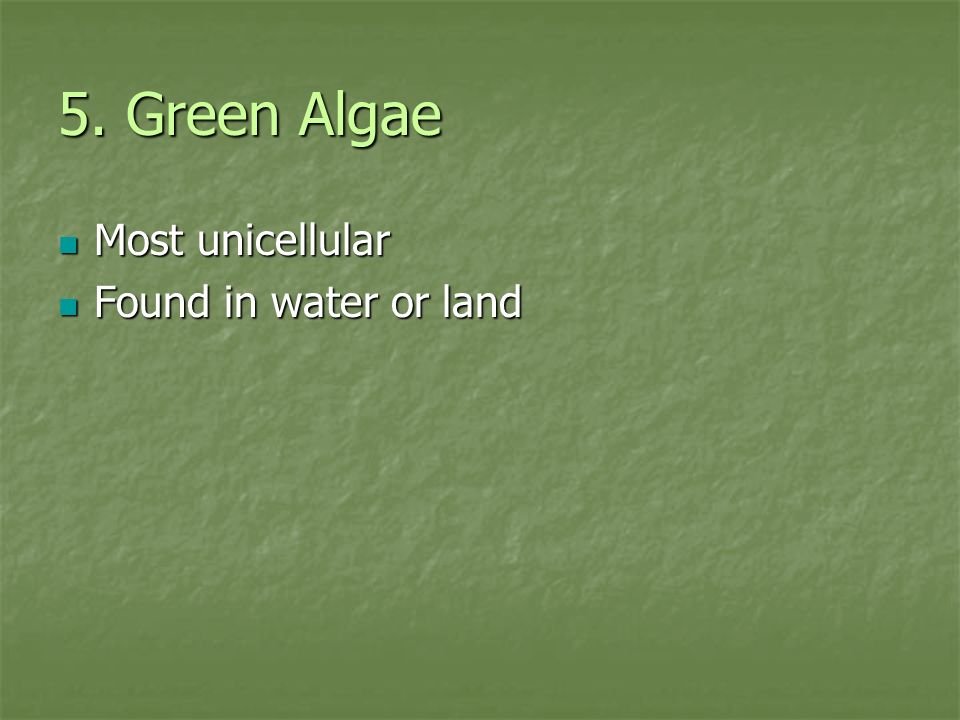 5. Green Algae Most unicellular Found in water or land