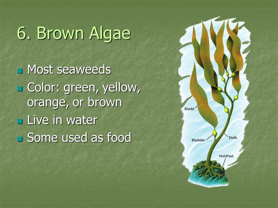 6. Brown Algae Most seaweeds Color: green, yellow, orange, or brown