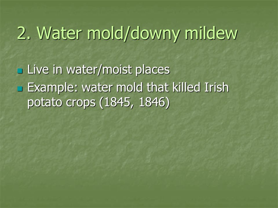 2. Water mold/downy mildew