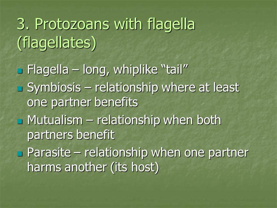 3. Protozoans with flagella (flagellates)