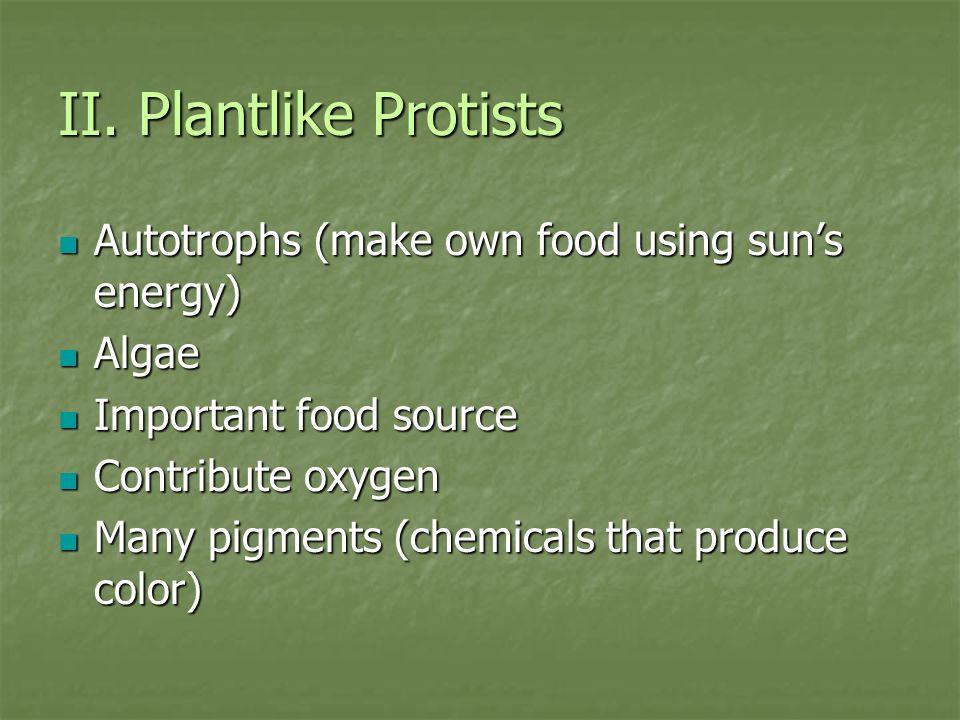 II. Plantlike Protists Autotrophs (make own food using sun's energy)