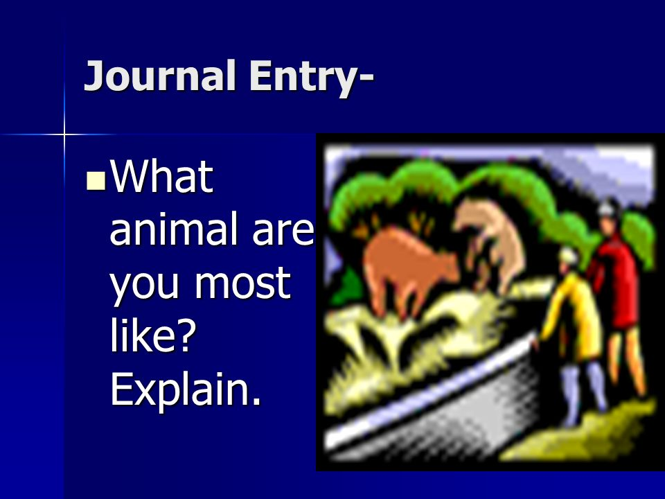What animal are you most like Explain.