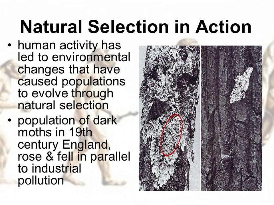 Natural Selection Moths Activity