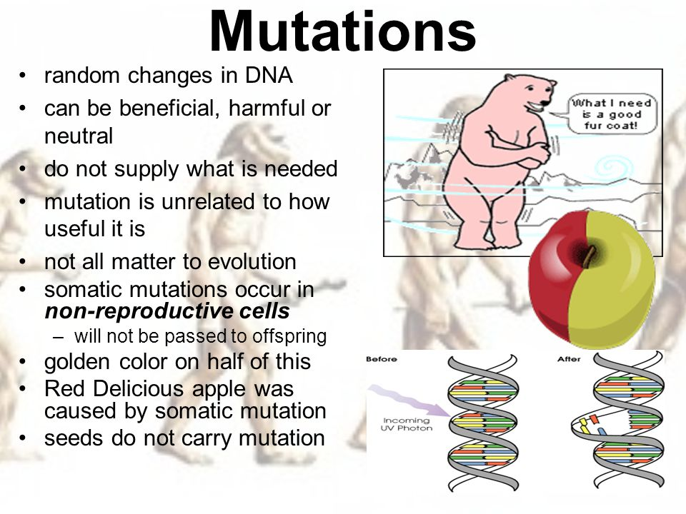 how to know if mutation is germ line or somatic