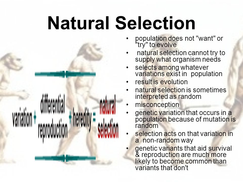 How Does Genetic Variation Contribute To Natural Selection