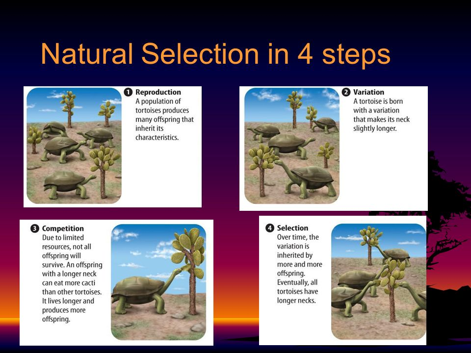 Natural Selection And Reproduction