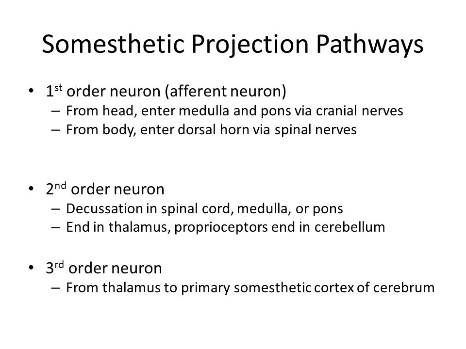 Somesthetic Projection Pathways
