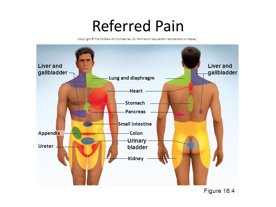 Referred Pain Figure 16.4 Liver and gallbladder Liver and gallbladder