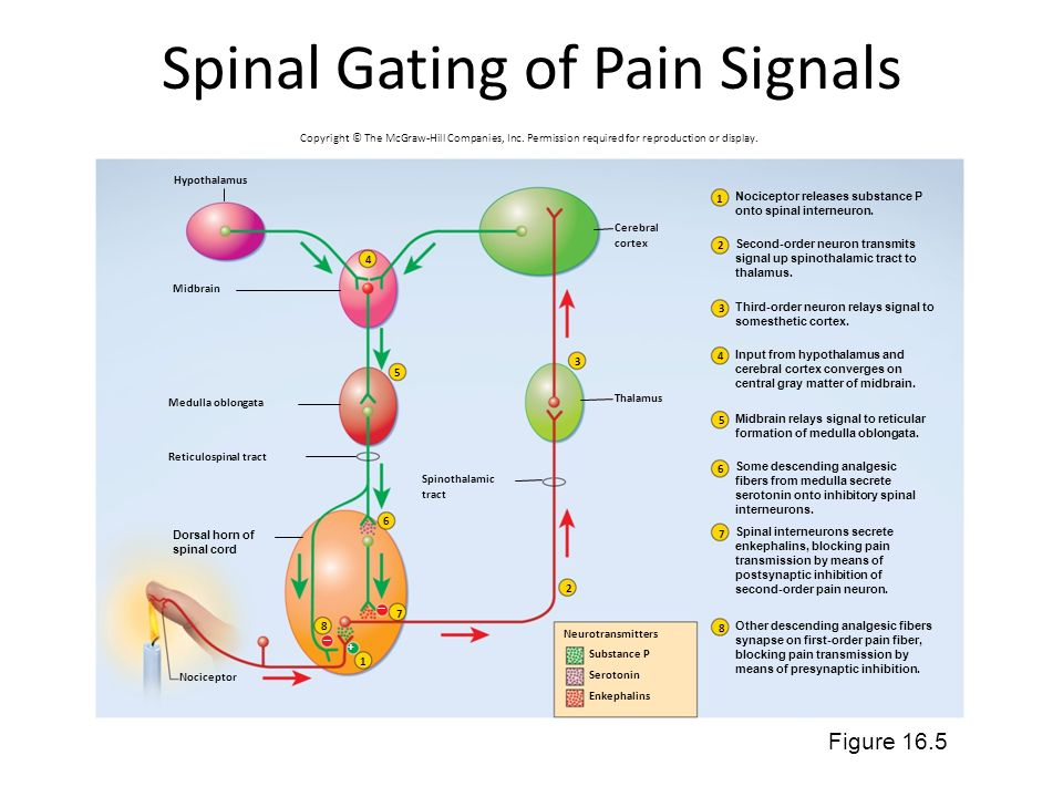 Spinal Gating of Pain Signals