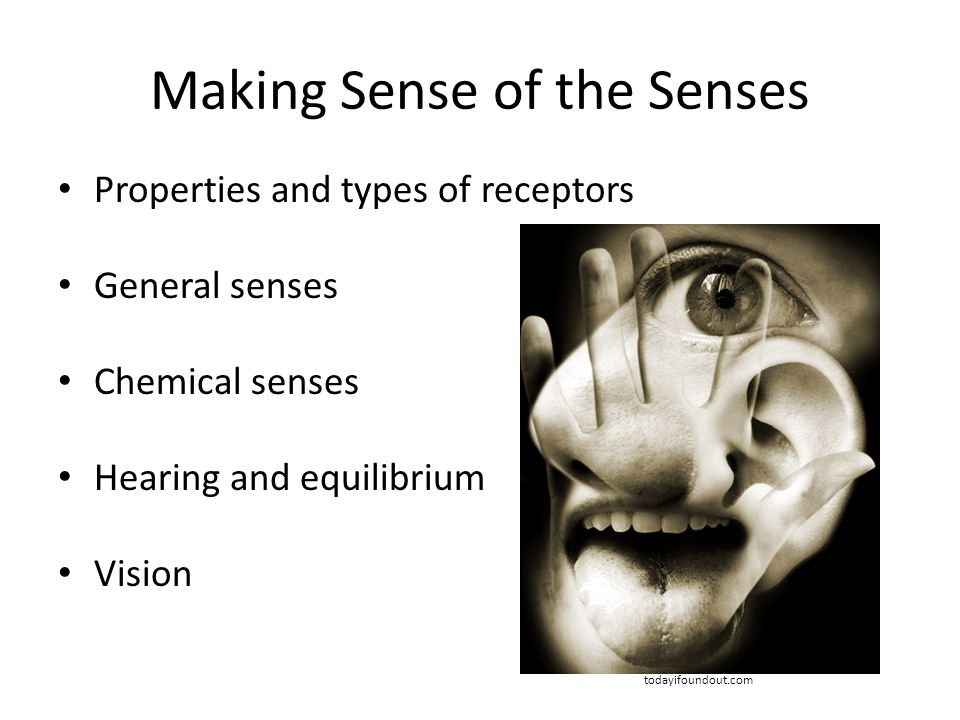 Making Sense of the Senses