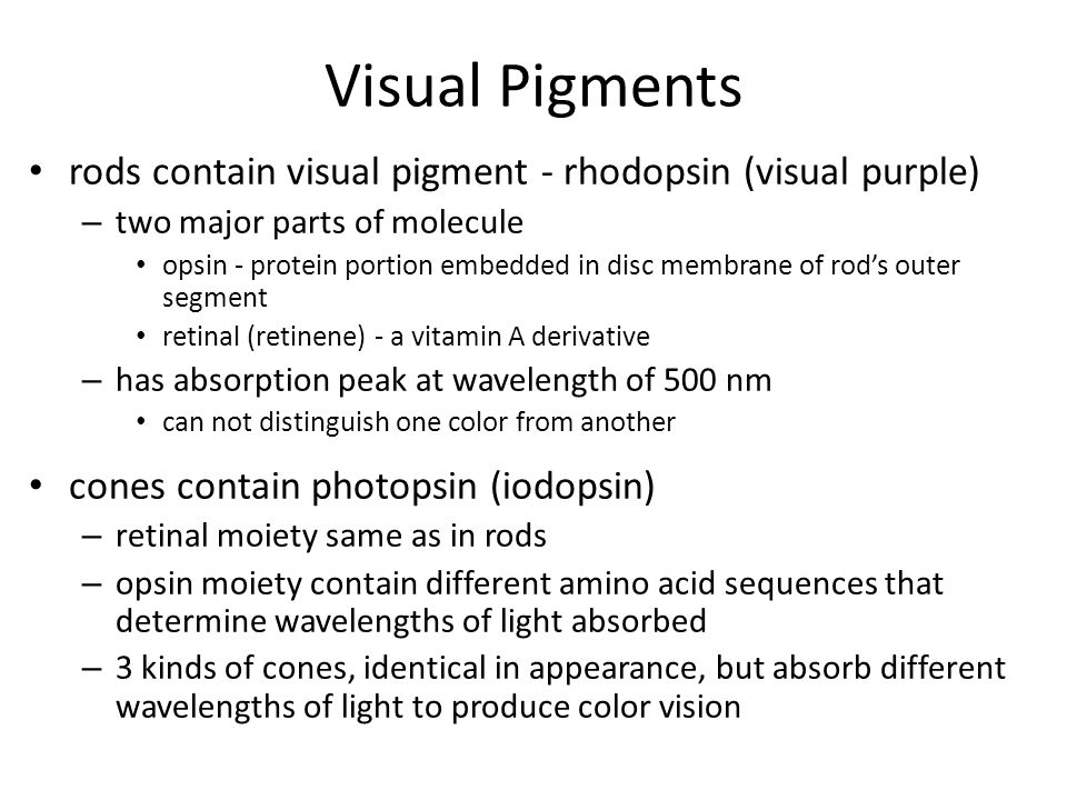 Visual Pigments rods contain visual pigment - rhodopsin (visual purple) two major parts of molecule.