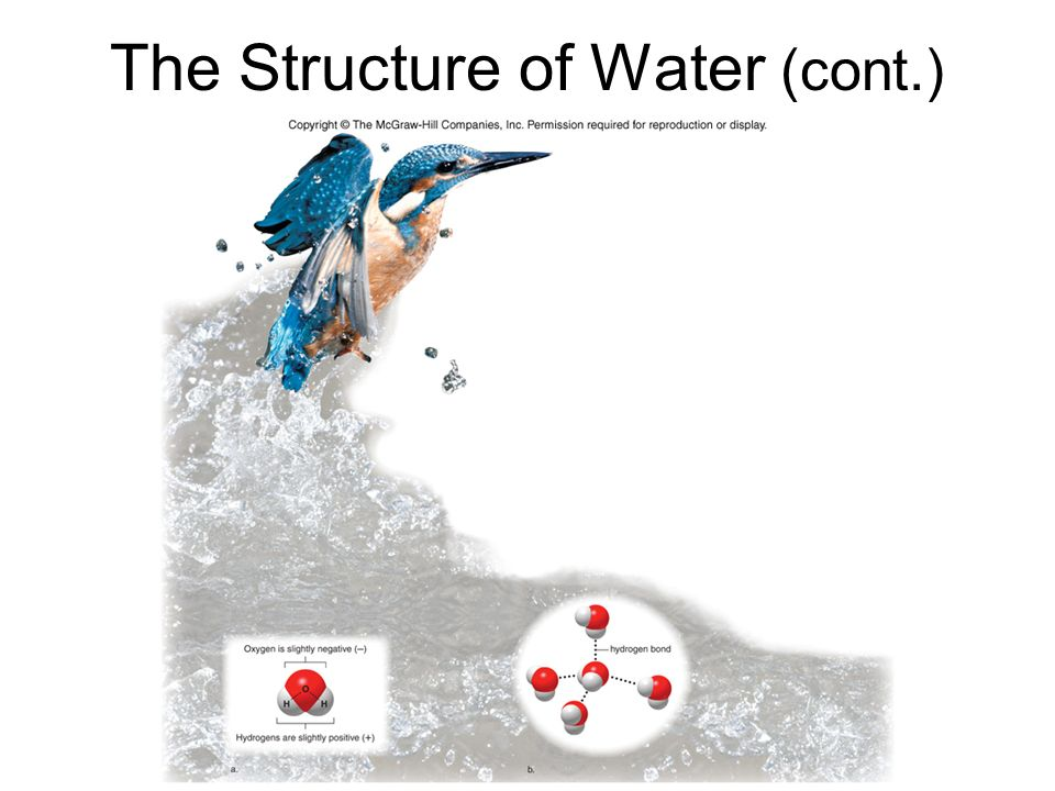 The Structure of Water (cont.)