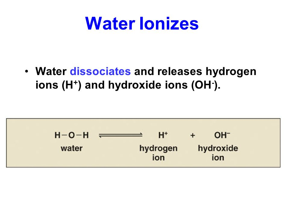 Water Ionizes Water dissociates and releases hydrogen ions (H+) and hydroxide ions (OH-).