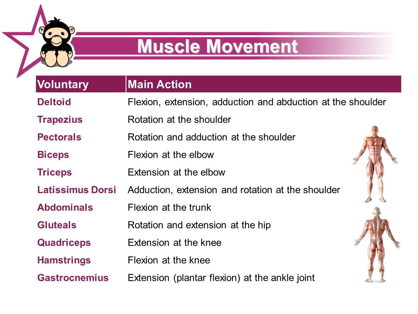 Muscle Movement 23