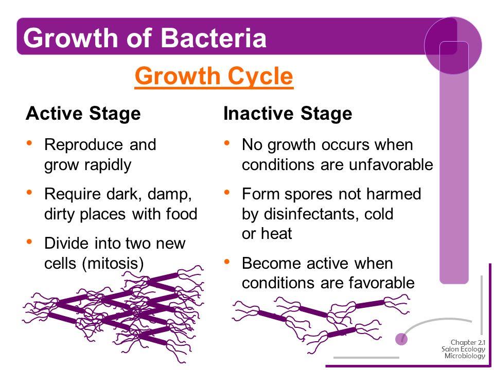 Spirilla Bacteria Diseases