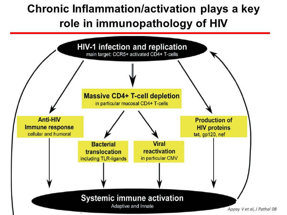 Chronic Inflammation/activation plays a key role in immunopathology of HIV