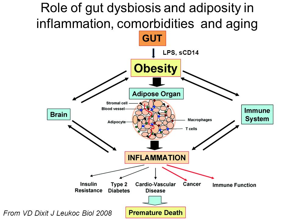 Role of gut dysbiosis and adiposity in inflammation, comorbidities and aging