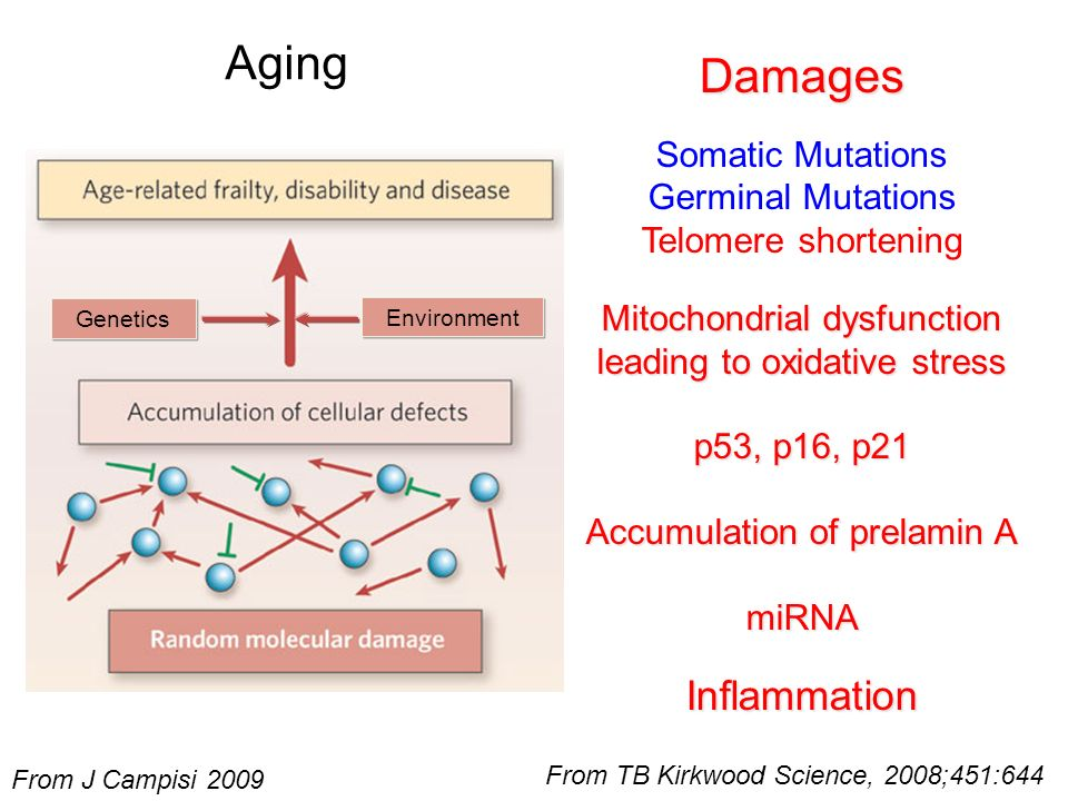 Aging Damages Inflammation Somatic Mutations Germinal Mutations