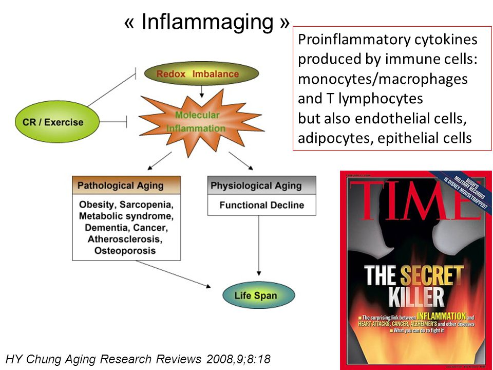 « Inflammaging »Proinflammatory cytokines produced by immune cells: monocytes/macrophages and T lymphocytes.