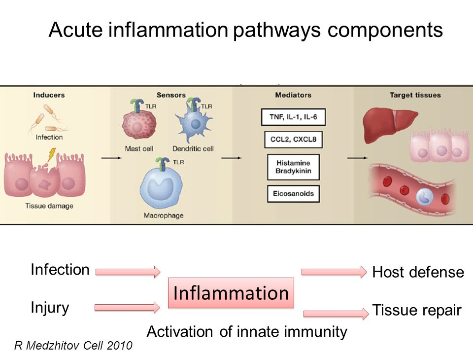 Acute inflammation pathways components