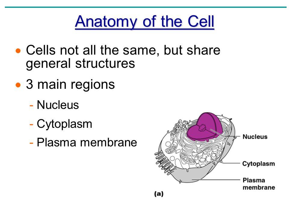 Cell anatomy worksheet