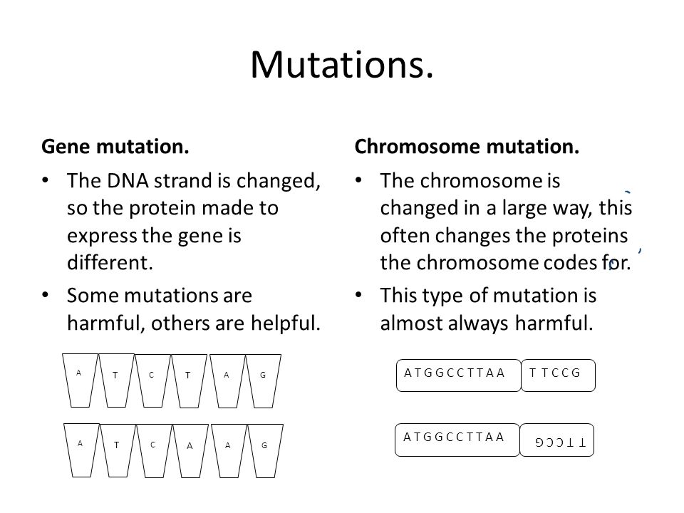 X Men Genetic Mutations Worksheet Answer Key Proga Info